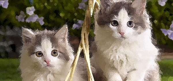 aetherconcept-chatons-infographistes